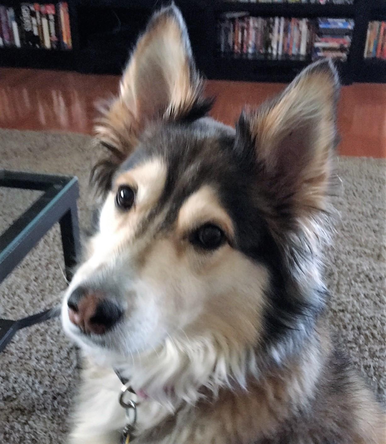Coda, Cory's dog.