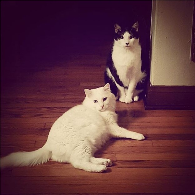 Casey's cats, Atticus and Detroit
